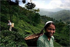 Darjeeling Holidays